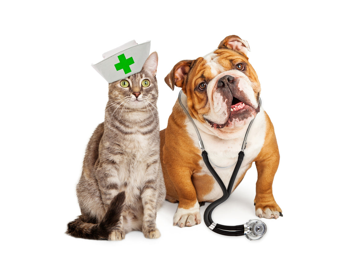 Nurse cat and Doctor dog