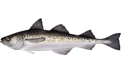 Dr. Dave's Best Wild Red Fish Oil Alaskan Pollock