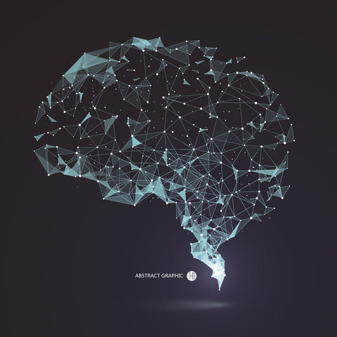 Brain vector graphic