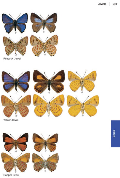 The Complete Field Guide to Butterflies of Australia: Second Edition. Michael Braby