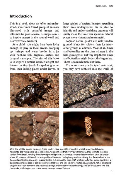 A Field Guide to Spiders of Australia  Robert Whyte, Greg Anderson