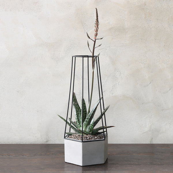 Indio Planter - Large - Modern Industrial & Eclectic Vintage Furniture & Decor by Urbanily - Planter - 1