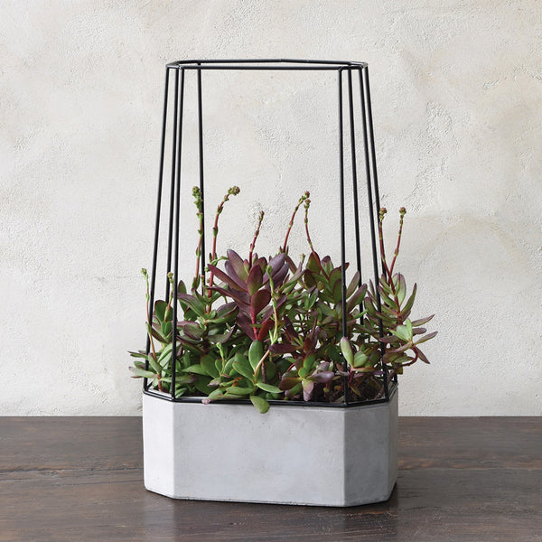 Indio Planter - Wide - Modern Industrial & Eclectic Vintage Furniture & Decor by Urbanily - Planter - 1