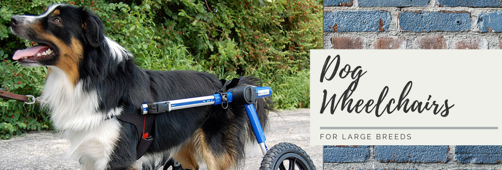 Wheelchairs for large breeds