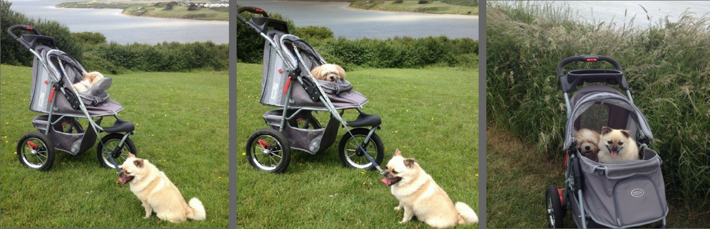 Dog Strollers Hiking