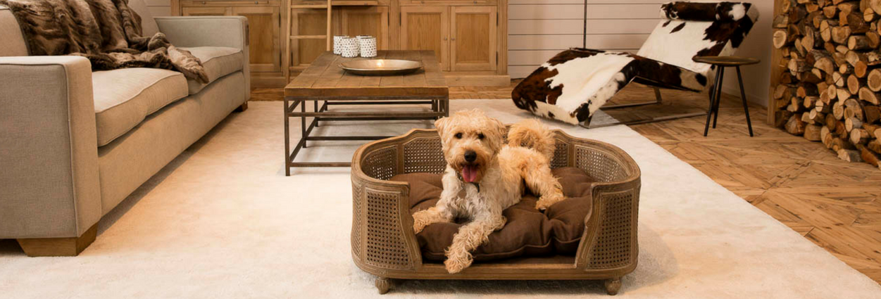 Browse Lord Lou Pet Furniture Designs In The Uk Free Uk Shipping