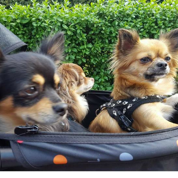 The Pet Roadster for small dogs
