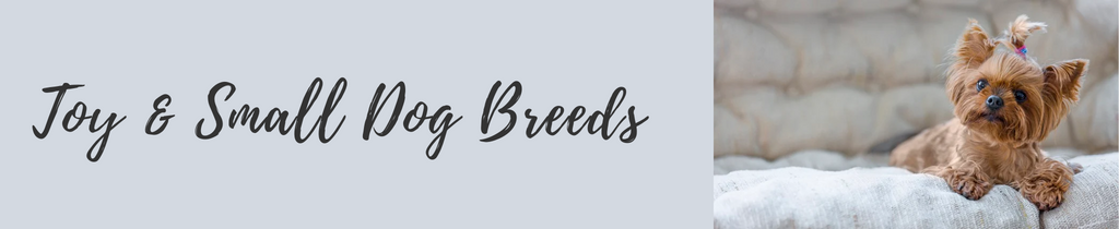 Small & Toy Breeds
