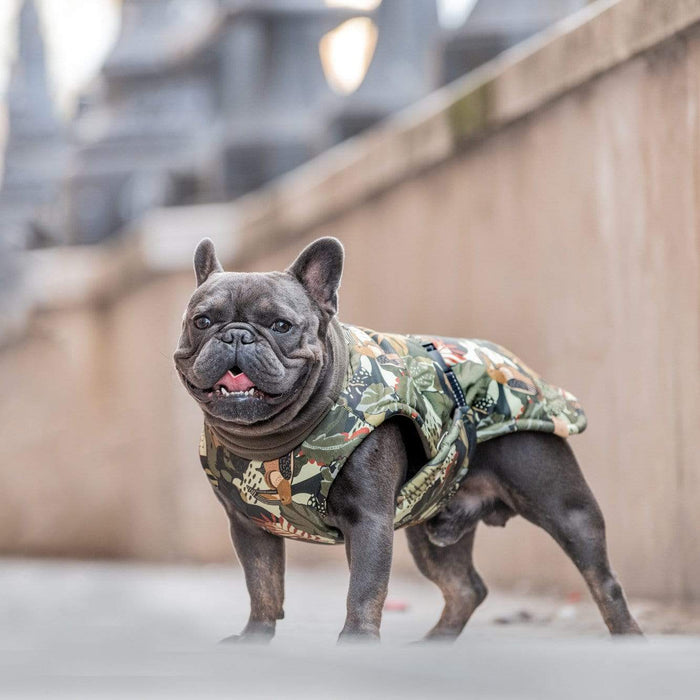 Designer French Bulldog Winter Coat by The Hound Project