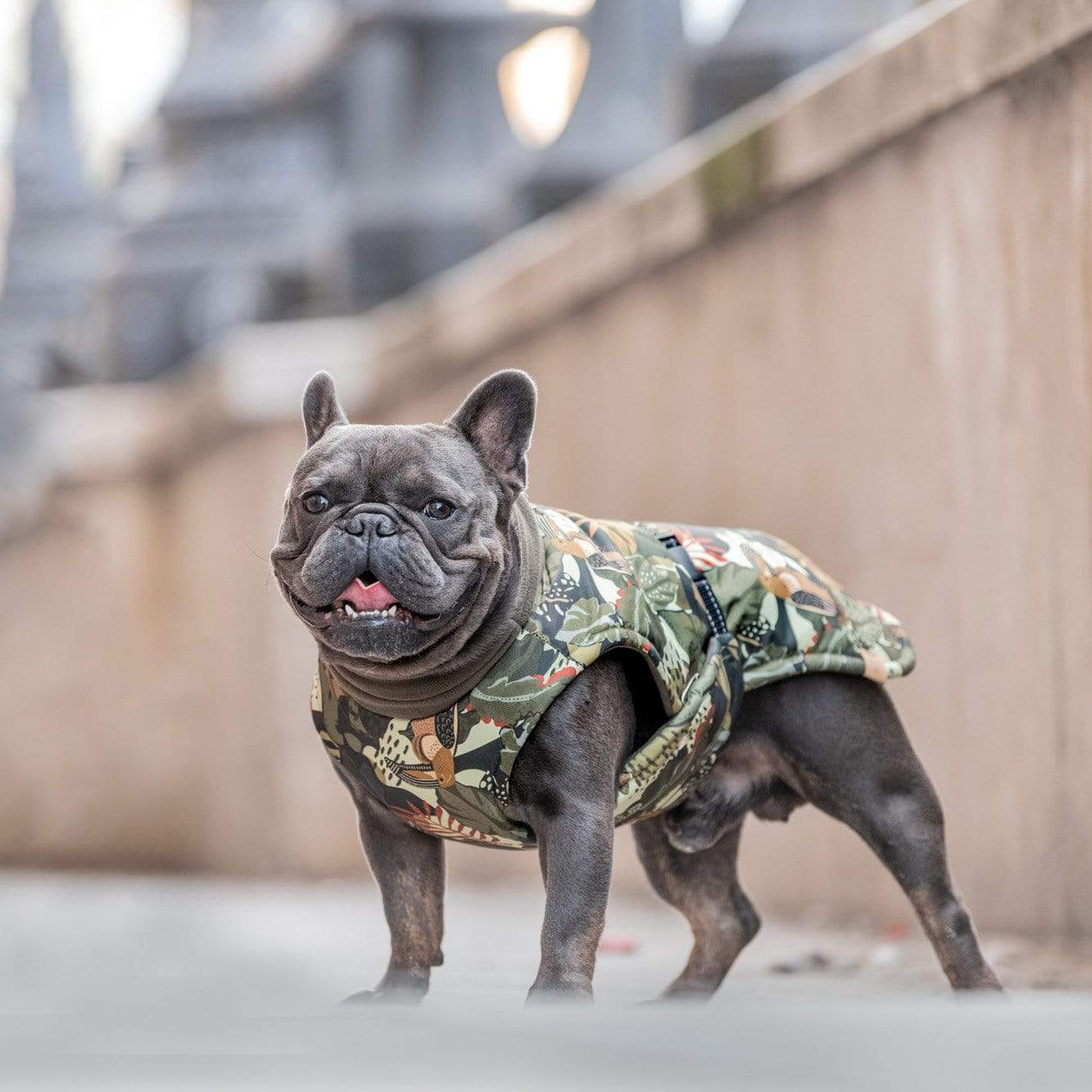 Hound Project Dog Apparel Designer French Bulldog Winter Coat by The Hound Project PetsOwnUs - Pets Own Us