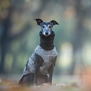 Hound Project Dog Apparel Aztec Designer Whippet Waterproof Coat by The Hound Project PetsOwnUs - Pets Own Us