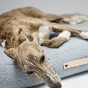 Labbvenn Luxury Dog Bed Small Oslo Luxury Dog Bed by Labbvenn in Cloud PetsOwnUs - Pets Own Us