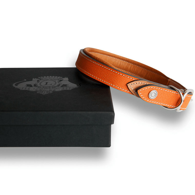 Lord Lou Dog Collar & Lead XXSmall Ascot Hippique Luxury Dog Collar in Orange by Lord Lou PetsOwnUs - Pets Own Us