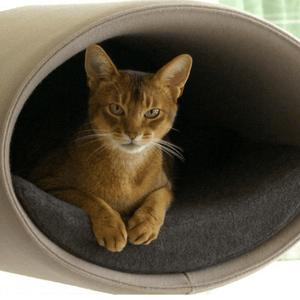 Pet Interiors Cat Beds Cream / Caramel Rondo Wall Cat Felt Cave by Pet Interiors PetsOwnUs - Pets Own Us