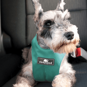 Sleepypod Pet Collars & Harnesses Small Clickit Sport Car Dog Safety Harness by Sleepypod - Robin Egg Blue PetsOwnUs - Pets Own Us