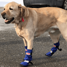 Wheels4Dogs Dog Boots Dog Wellies Walkin' All-Weather Boots - Set PetsOwnUs - Pets Own Us