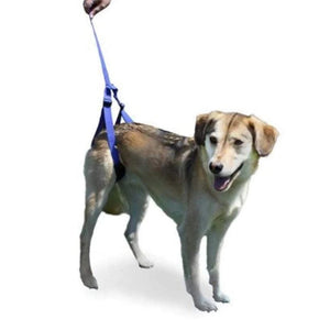 Wheels4Dogs Walkin' Rear Support Leash PetsOwnUs - Pets Own Us