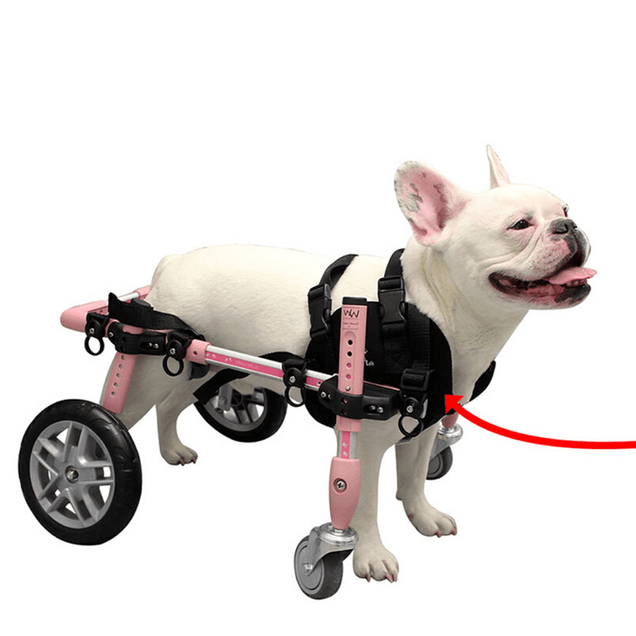 Walkin' Wheels Front Neoprene Harness