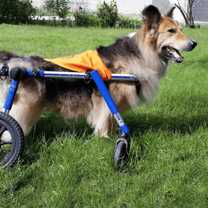 Wheels4Dogs Dog Wheelchair Walkin' Wheels Full Support/4-Wheel MED/LARGE PetsOwnUs - Pets Own Us