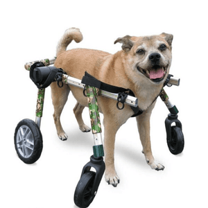 Wheels4Dogs Dog Wheelchair Walkin' Wheels Full Support/4-Wheel MEDIUM PetsOwnUs - Pets Own Us