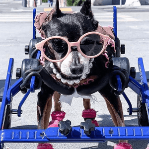 Wheels4Dogs Dog Wheelchair Walkin' Wheels Full Support/4-Wheel MINI PetsOwnUs - Pets Own Us