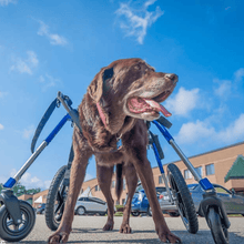 Wheels4Dogs Dog Wheelchair Walkin' Wheels LARGE Front Wheel Attachment PetsOwnUs - Pets Own Us