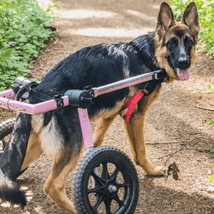 Wheels4Dogs Dog Wheelchair Walkin' Wheels Med/Large Dog Wheelchair PetsOwnUs - Pets Own Us