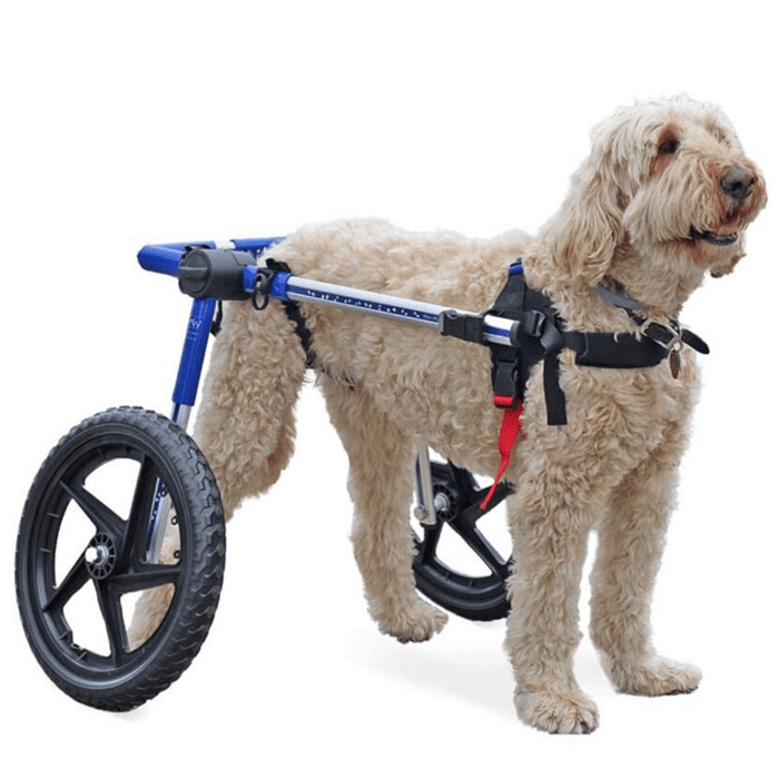 Walkin' Wheels Med/Large Dog Wheelchair
