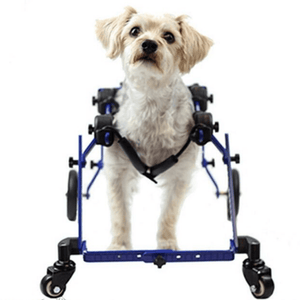 Wheels4Dogs Dog Wheelchair Walkin' Wheels MINI Front Wheel Attachment PetsOwnUs - Pets Own Us