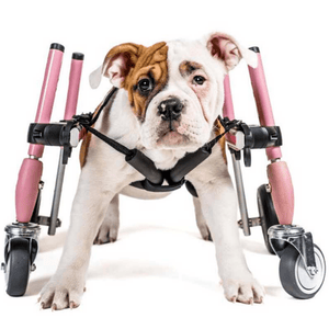 Wheels4Dogs Dog Wheelchair Walkin' Wheels SMALL Front Wheel Attachment PetsOwnUs - Pets Own Us