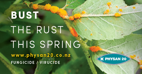 Bust Rust this Spring!