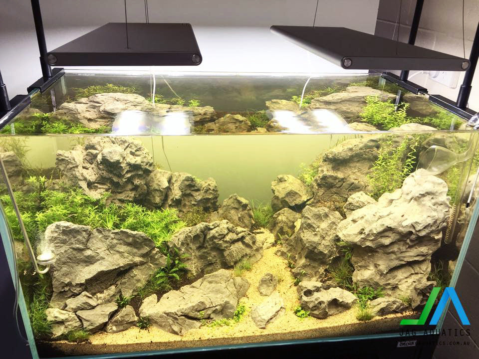 Green Valley - Aquascape - Update 2