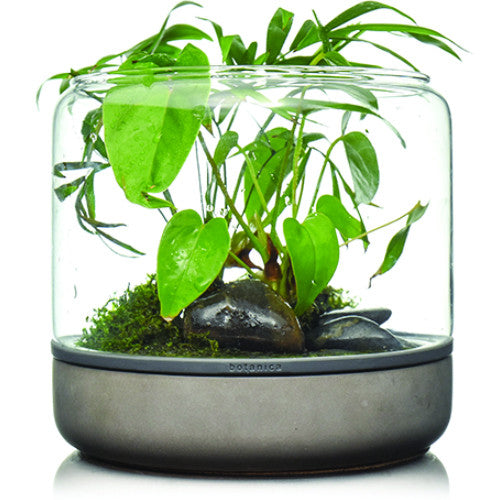 Botanica Sanctuary M Temperate Concrete Terrarium - JagAquatics