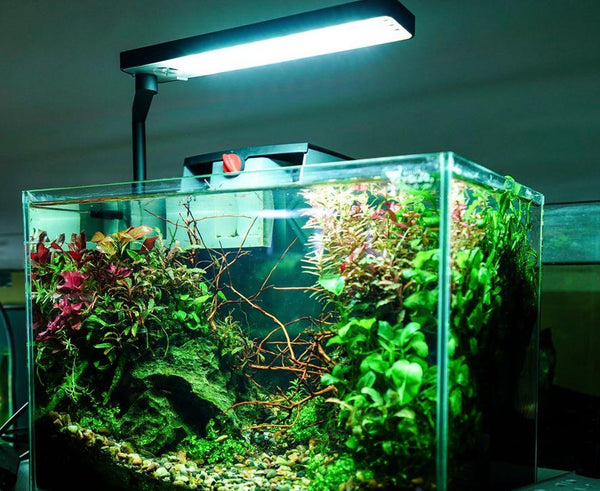 Chihiros CII Freshwater LED Light - Black ( For Nano Tanks )