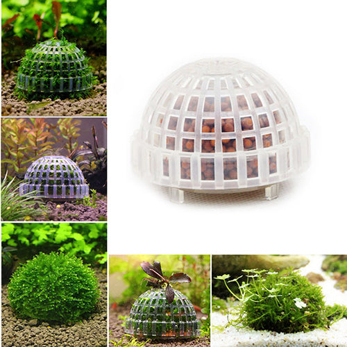 Moss Dome - ( Quantity 1 ) - JagAquatics