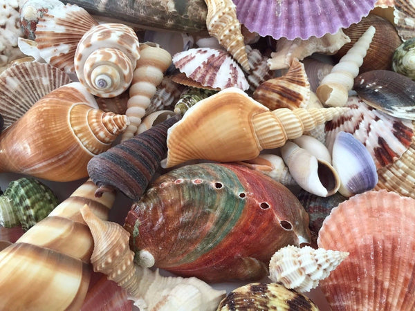 Shells Assorted 500g for craft, wedding, home, terrarium decoration