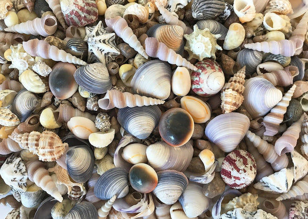 SHELLS Small Assorted 300g for craft, wedding, home, terrarium decoration - JagAquatics