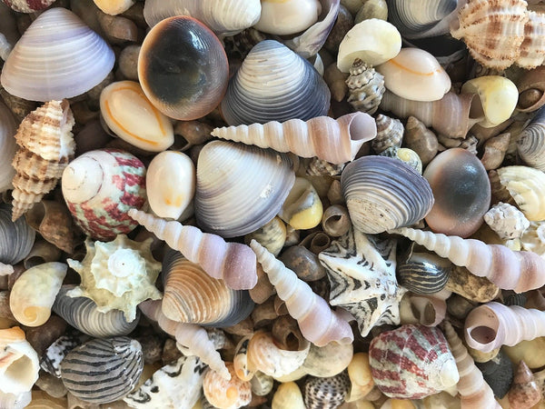 SHELLS Small Assorted 300g for craft, wedding, home, terrarium decoration