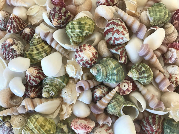 SHELLS small (1-3 cm) MIX colour green,red,white and pearl 300g for craft, wedding,home, terrarium decoration