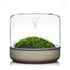 Botanica Sanctuary M Rainforest Concrete Terrarium - JagAquatics