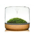 Botanica Sanctuary M Rainforest Oak Terrarium - JagAquatics