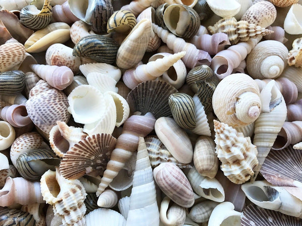 SHELLS White, Pearl, Brown - 300G, Small for craft, wedding, home, terrarium decoration - JagAquatics