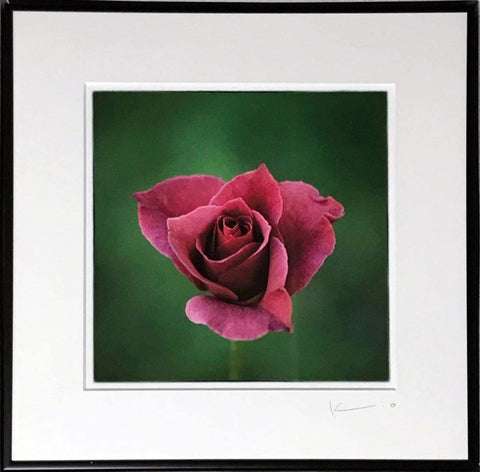 Untitled (Pink Rose)