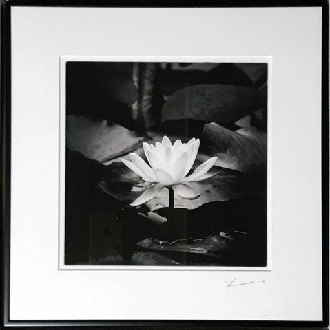 Untitled (Lotus)