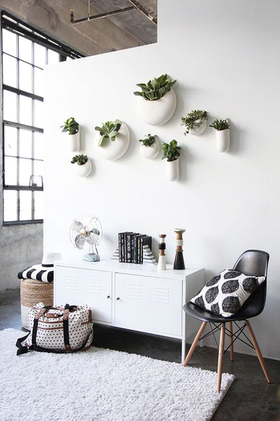 Hanging plants on a white wall. Simple white living room, beautiful minimalist design.