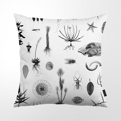 Cushion Cover - Natural Curiosities