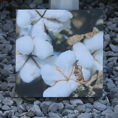 Cotton Canvas Pictures (Multiple Images)