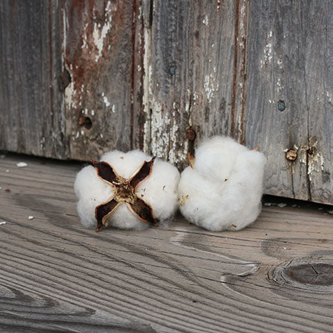 Authentic Cotton Boll