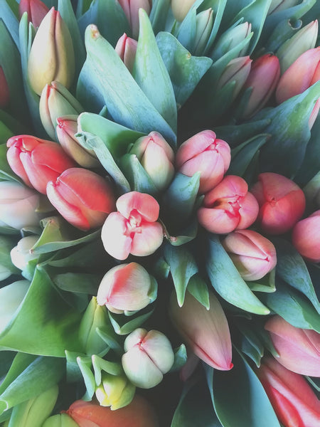 CHEERFUL TULIPS