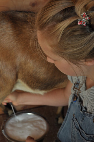 young-girl-milking-brown-and-white-goat